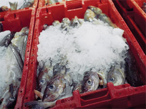 Refrigeration technology for marine systems-Fishing